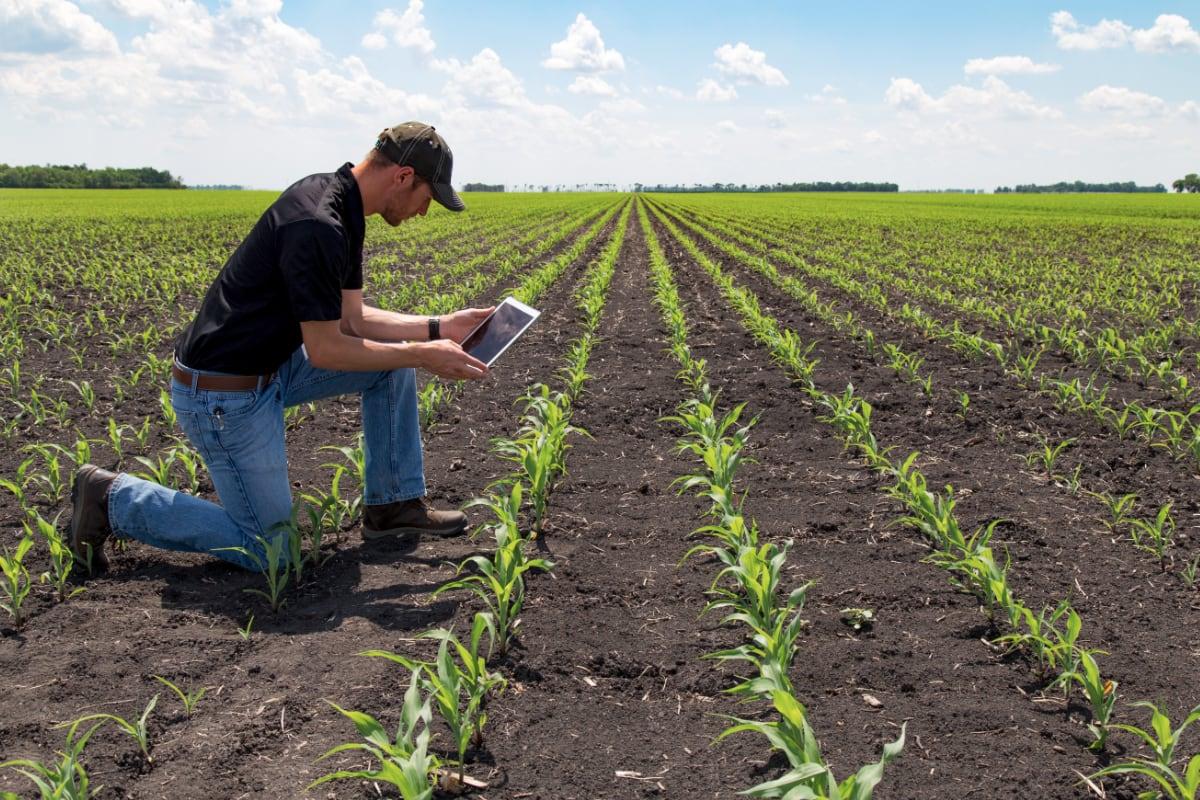 Agribisnis - Jurusan Favorit di IPB Bogor dan Paling Banyak Peminat Institut Pertanian Bogor